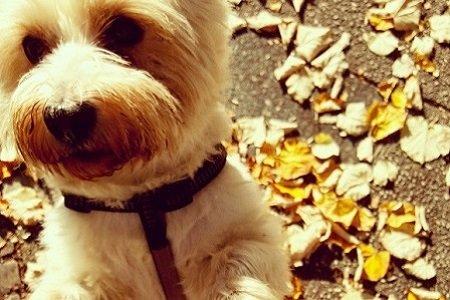 Max-Hund-fallbeispiel
